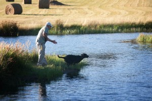 Training Event #4 @ Coyote Creek Retrievers